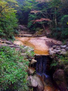 Bosque de coníferas del monte Misen