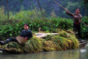Epoca de cosecha en Tam Coc