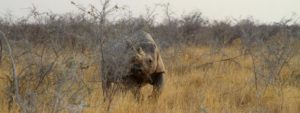 Rinoceronte en Etosha, Namibia