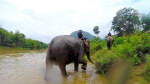 Elefantes en Luang Prabang, Laos