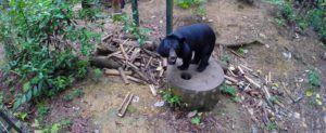 Centro de rescate de osos Tat Kuang Si Rescue Center