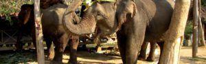 Visita al Elephant Village en Luang Prabang, Laos