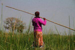 Navegar por los estrechos canales del rio Okavango