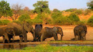 Navegar por el Rio Chobe y toparnos con una manada de elefantes cruzando el rio