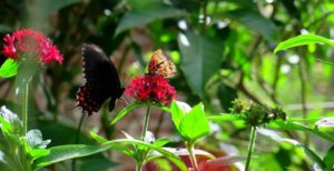 Reserva Atitlan, mariposario