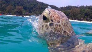 Turtle point, Islas Perhentian. Malasia