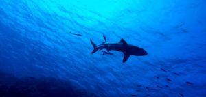 Shark point, Islas Perhentian. Malasia