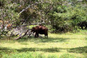 Parque Nacional de Yala, Sri Lanka
