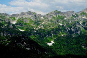Monte Vogel