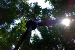 Treetops adventure, Capilano