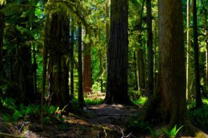 Cathedral Grove, Port Alberni