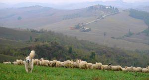 Crete Senesi Panoramic Point, Toscana, Italia