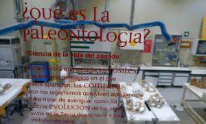 Museo Aragonés de Paleontología