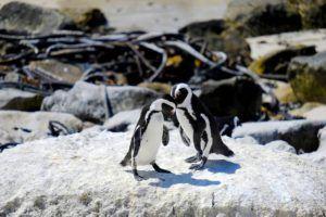En ruta por la Península del Cabo, Sudáfrica