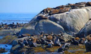 Hout Bay y los leones marinos, qué ver en la Península del Cabo