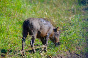 Hlane Royal National Park, Suazilandia (Esuatini)