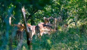 Hlane Royal National Park, qué ver y hacer