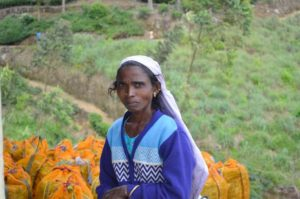 Mujeres Tamil en Haputale, Sri Lanka