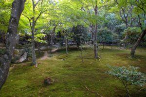 El Parque Yoyogi, Shibuya