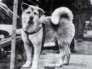 Hachikō