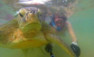 Nadar con tortugas en la playa de Hikkaduwa