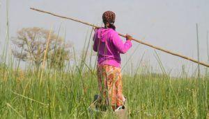 En mokoro por el Rio Okavango