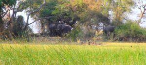 Elefantes en las orillas del rio Okavango