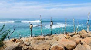 Pescadores zancudos de Sri Lanka