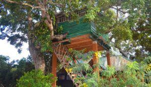 Yala Eco Tree House