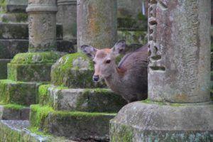 Qué ver en Nara, Japón