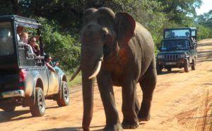 Realizar un safari en el Parque Nacional de Yala