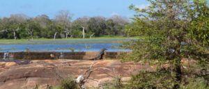 Safari por el Parque Nacional de Yala, Sri Lanka
