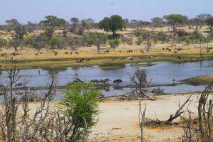 Cientos de animales en el Parque Nacional Makgadikgadi