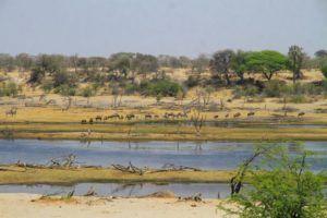 Cientos de herbívoros en el Parque Nacional Makgadikgadi