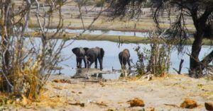 Parque Nacional Makgadikgadi, Botswana