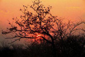 Atardecer en el Parque Nacional de Etosha, Namibia