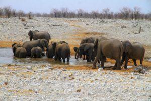 Manada de elefantes en el Parque Nacional de Etosha, Namibia
