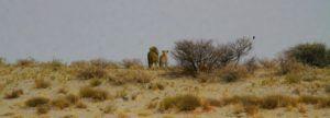 Nala y Simba de El Rey León