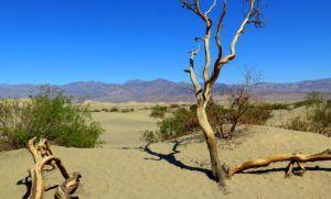 Las dunas de Mesquita Flat