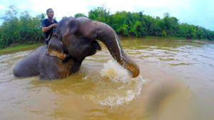 Mahout y su elefante, Luang Prabang, Laos