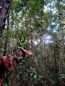 Parque Nacional de Bako, qué ver y hacer