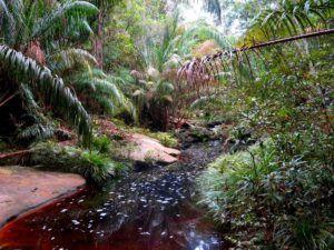 Ruta Tajor, Parque Nacional de Bako