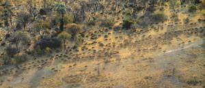 Migración de ñus desde el aire