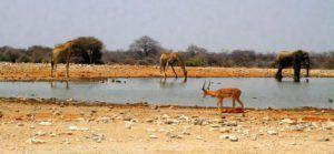 Recorrer por libre el Parque Nacional de Etosha