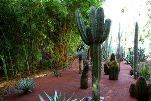 Los Jardines Majorelles de Marrakech, Marruecos