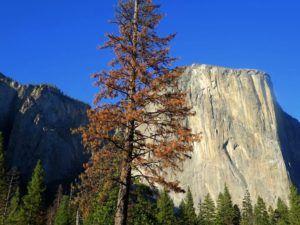 Capitán, Yosemite, EEUU