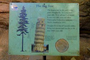 Explicación de Big Tree, Cathedral Grove