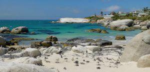 Boulders Bay y los pingüinos del Cabo