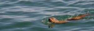 Hout Bay y Isla de Duiker, Sudáfrica