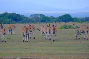 De Hoop Nature Reserve, Sudáfrica